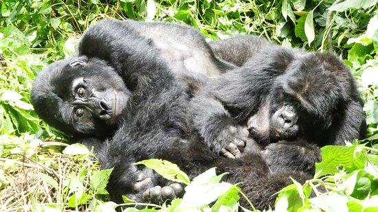 Ichumbi Gorilla Lodge: The gorillas, of course!