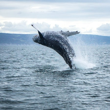 Coldwater Alaska: Whale Watching!