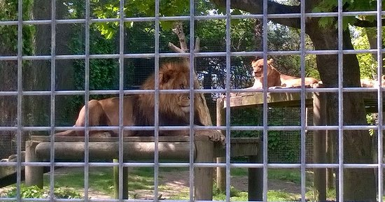 Newquay Zoo: Lovely lions
