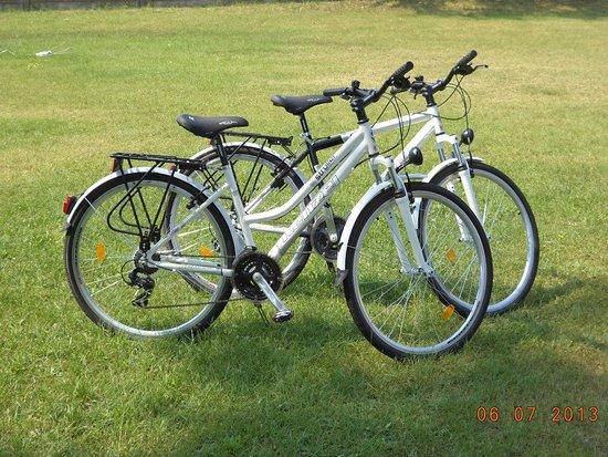 Teremgokart Palya & Kavezo: Kerékpárkölcsönzés :)