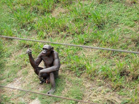 Sri Chamarajendra Zoological Gardens: Gurumurthy - the Chimp
