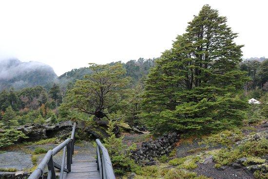 Parque Cuevas Volcánicas : O bosque ao lado merece um passeio