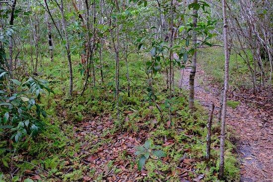 Tab Kak Hang Nak Hill Nature Trail: Les clairiéres