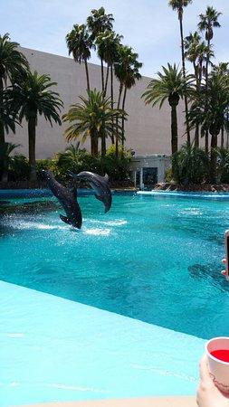 The Mirage Hotel & Casino Photo