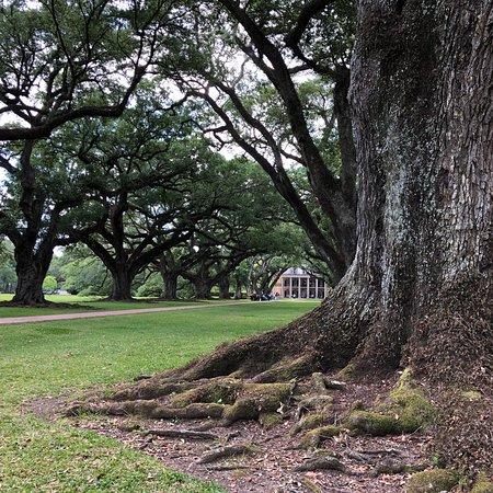 Oak Alley Plantation Photo