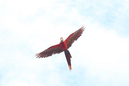 Drake Bay, Kosta Rika: photo1.jpg