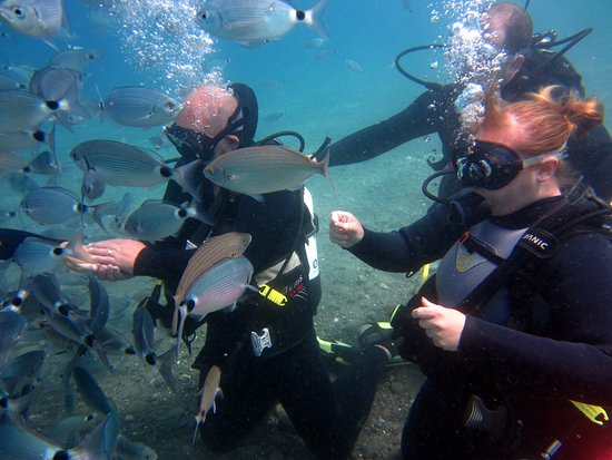 Discover Scuba Diving in Kos: feeding the fish