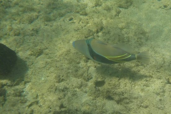 Kuilima Cove: Fish in Bay