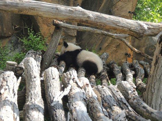 Billet d'entrée pour le ZooParc de Beauval : le BB