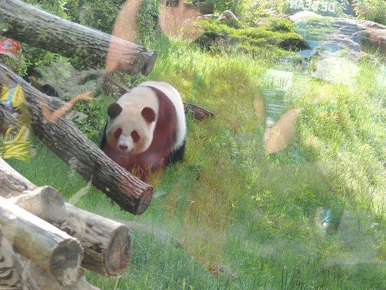 Billet d'entrée pour le ZooParc de Beauval : La maman