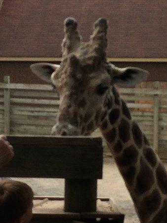 Moseley, VA: Metro Richmond Zoo