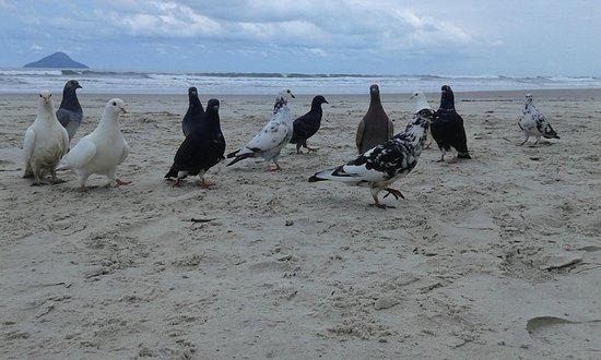 写真Juquehy Beach枚