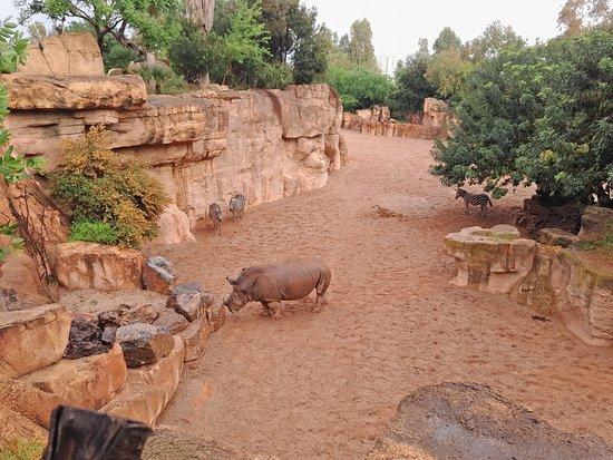 Bioparc Valencia: Биопарк Валенсия: носороги, зебры, страусы