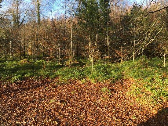 Stranorlar, Ireland: winter leaves