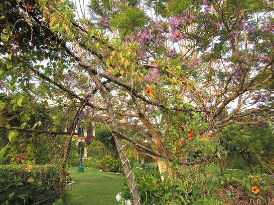 Hotel Rincon del Arco: Uno scorcio del giardino