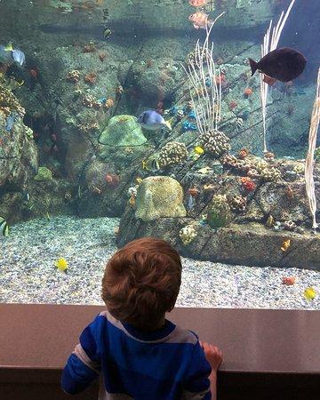 Aquarium of the Pacific: Salt water tank