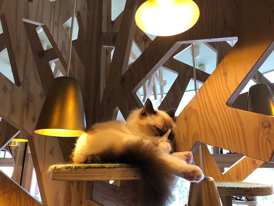 Cat Cafe Mocha Akihabara: Cat in the cat tree.