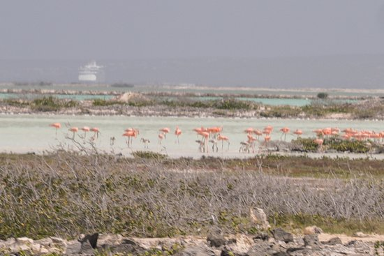 Spelank Lighthouse : We never got close to the flamingos. There were thousands