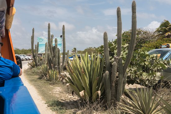 Bonaire Windsurf Place: Entry to the Windsurfing Place. Note hoe arid everything is