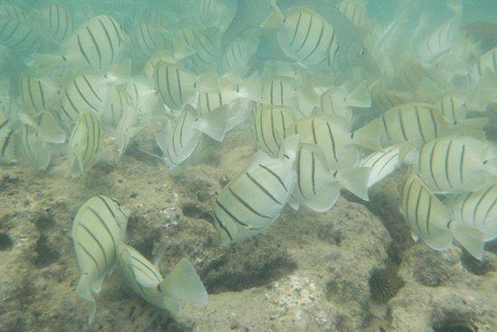 恐龙湾自然保护区照片