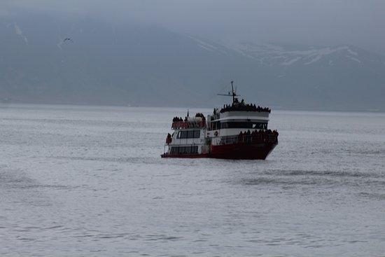 从雷克雅未克出发的观鲸之旅照片