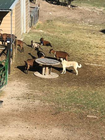 Mountain Goat Lodge-bild