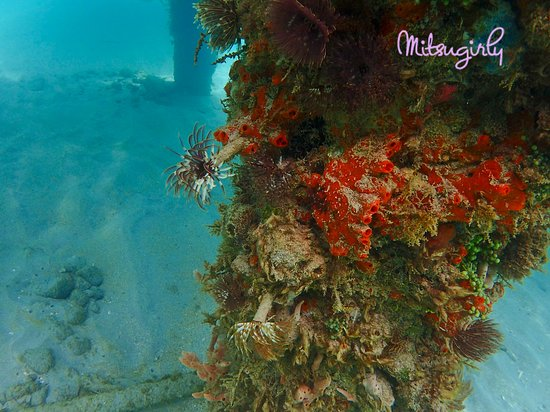 Anse Mitan : snorkeling around the ferry pier