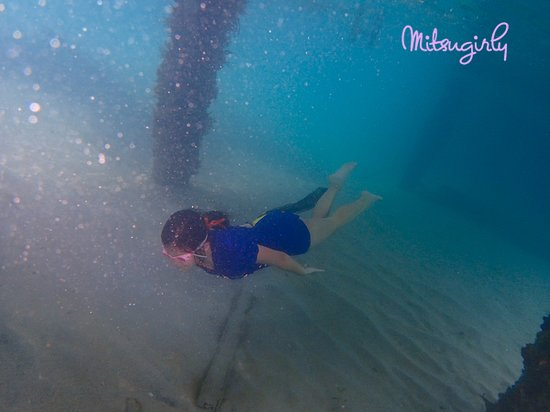 Anse Mitan: snorkeling around the ferry pier