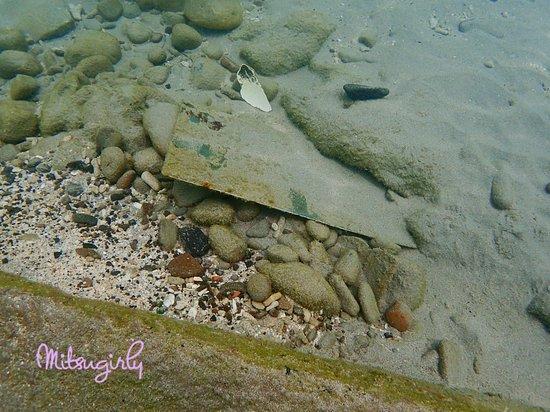 Anse Mitan: snorkeling around the ferry pier-sharp metal in the water