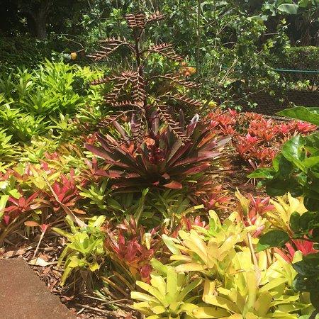 Pineapple Park - Volcano: photo1.jpg