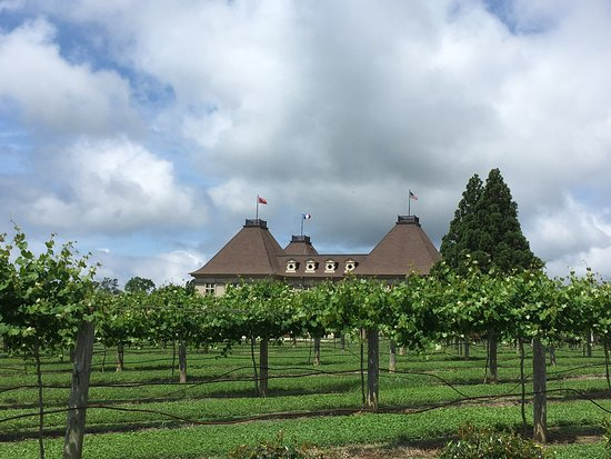 Chateau Elan Winery: Vineyards