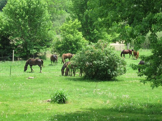 La Valle, WI: Horses who board at the farm