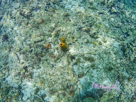 Underwater Sculptures: Diving sculptures