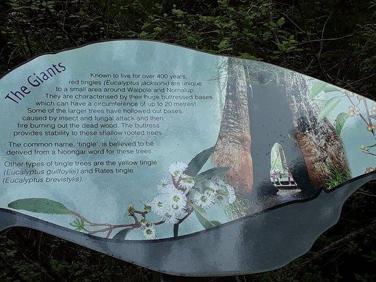 Valley of the Giants Tree Tops Walk照片