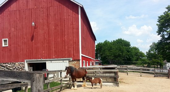 West Dundee, IL: A Clydesdale and a pony at Randall Oaks Zoo