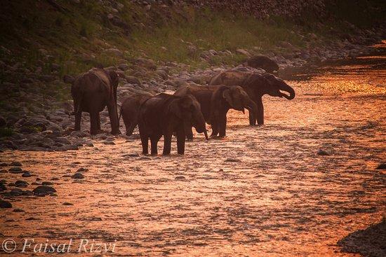 Ranthambore National Park: Elephant in Ranmganga Rever