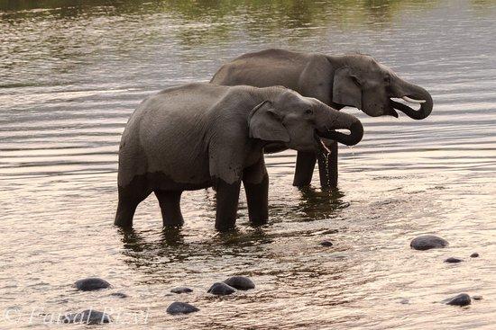 Ranthambore National Park: Elephant Dhikala Zone Jim Corbett