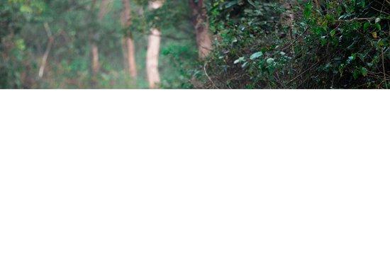 Ranthambore National Park: Tiger In Jim Corbett