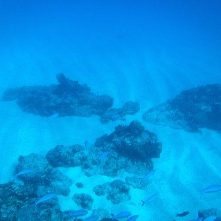 Maritim Crystals Diving Centre: photo9.jpg