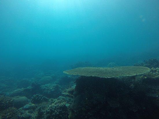Tioman Dive Centre: Coral