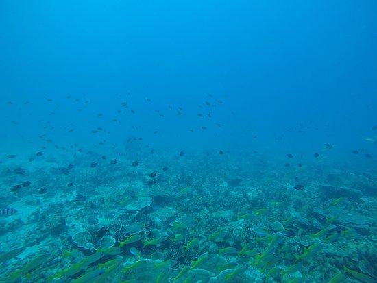 Tioman Dive Centre: Fish and Coral