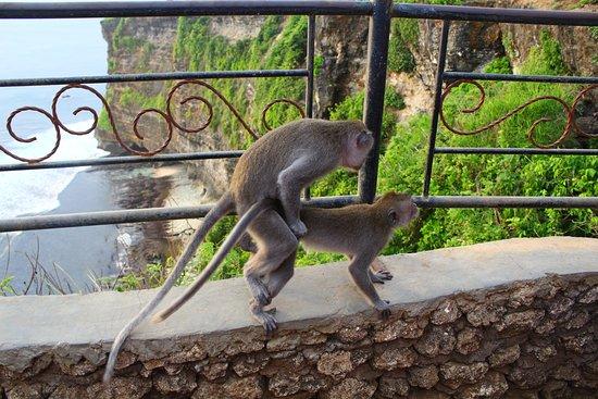 วัดอูลูวาตู: monkeys