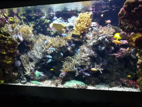 Gardaland SEA LIFE Aquarium照片