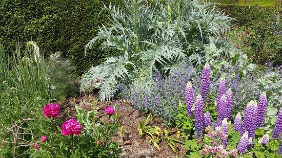 Hole Park Gardens: Colourful flowers