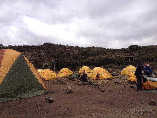 Blessed Tanzania Travel: Camping style through Lemosho route-Kilimanjaro Climb