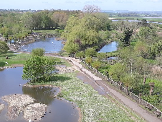 Churchend Farm Bed & Breakfast : Slimbridge Wetlands Centre
