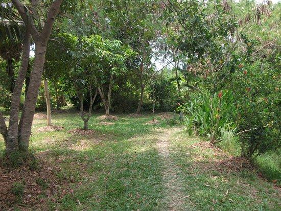 Ganesha Kampot Eco Guesthouse and More: Path to pool