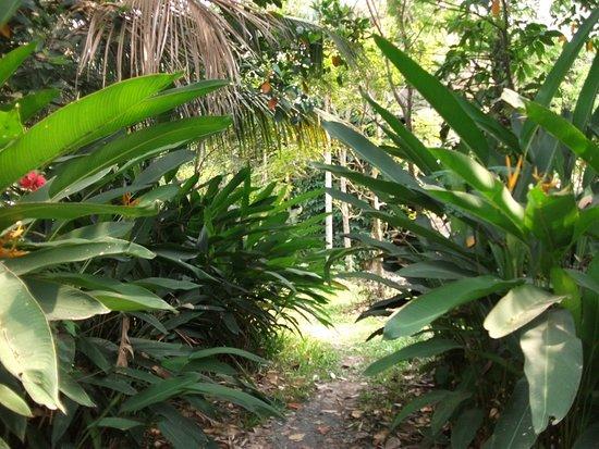 Ganesha Kampot Eco Guesthouse and More: Gardens