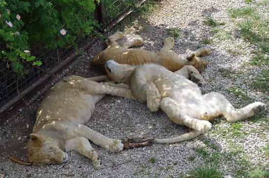 Taigan Lions Park: отдых в жару