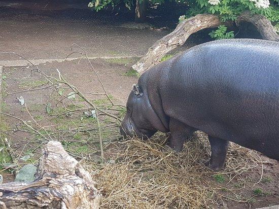 ZSL London Zoo Fotografie
